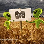 Wheat-Field-Green-Aliens-Monsanto