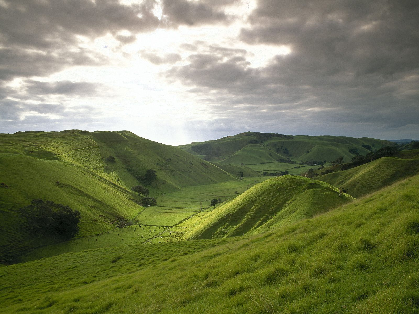 rolling-hills-of-new-zealand