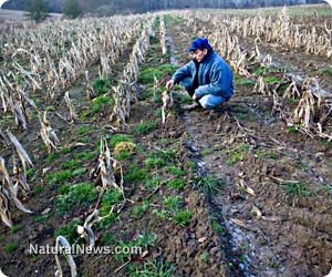 Man-Sad-Dead-Crops
