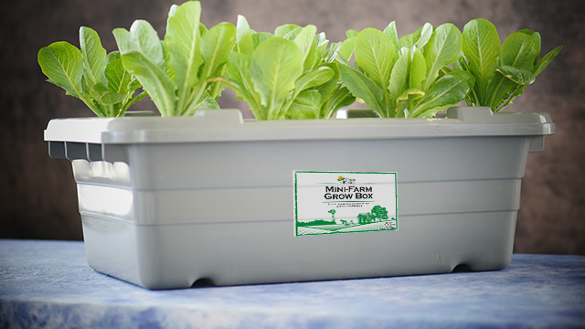 Mini-Farm-Grow-Box