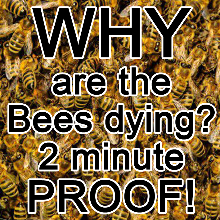 Why ary the bees dying
