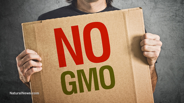 NO-GMO-Protest-Sign-Cardboard
