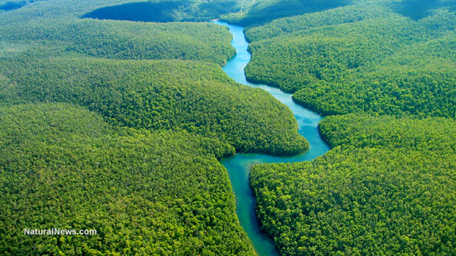 Amazon-River-Rainforest-Water