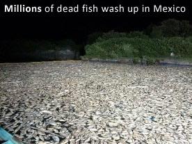dead-fish-mexico