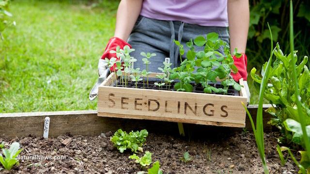 Gardening-Soil-Organic-Farm