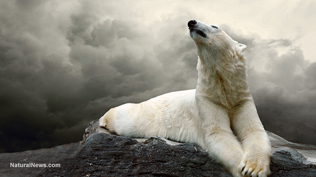 Polar-Bear-Laying-Down-Global-Warming