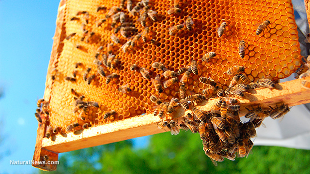 Bees-Honeycomb-Hive