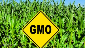 Gmo-Sign-Crop-Farm