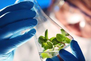biotechnology-gmo-food-600x400