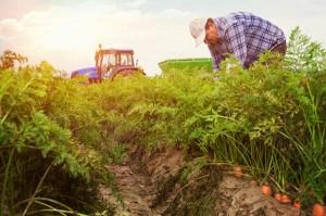 organic-farm-big