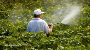 watering-pesticide