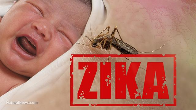 zika-baby-mosquito