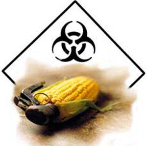 gm_corn_grenade_5