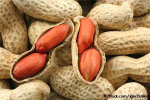 peanut-allergy-cure
