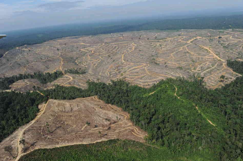 sumatra_deforestation1_custom-39040cba07f740c9627ec3f75c5fd0982029db73-s6-c30