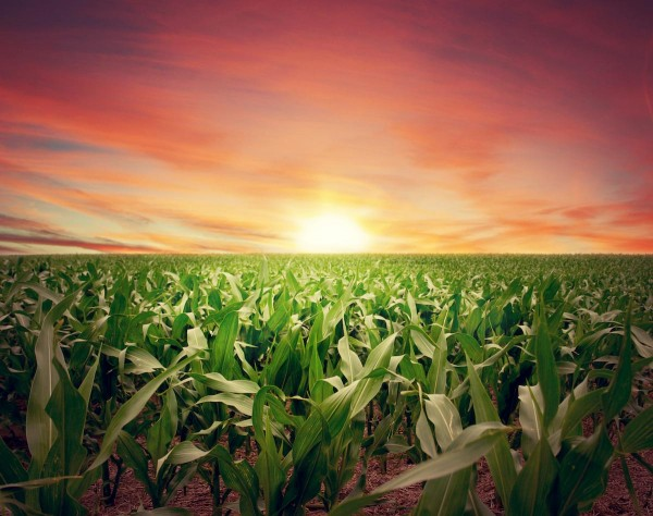 Sunset-Farm-Crops-Field-e1471505264490