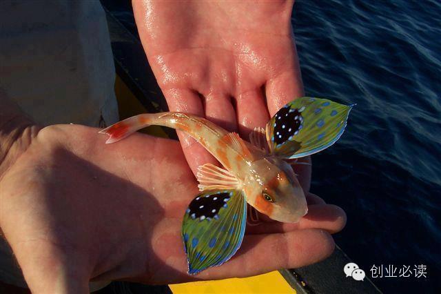 fish-electromagnetic