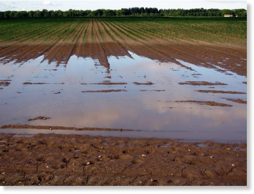 Wet_Field_Public_Domain