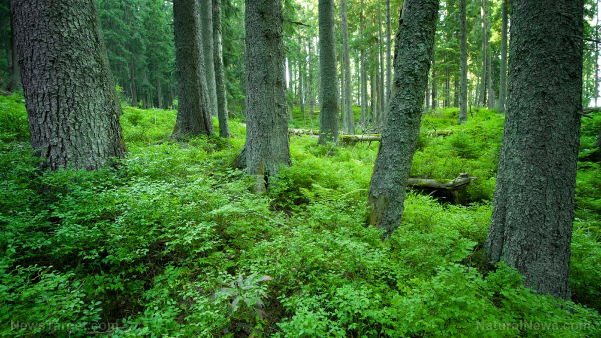 Woods-Forrest-Trees-Nature